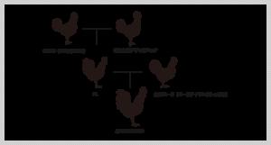 みやざき地頭鶏の血統